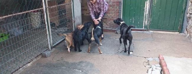 Viana do Castelo: Associação Vila Animal de malas à porta